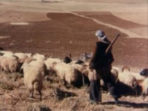 the-herd-suru-4