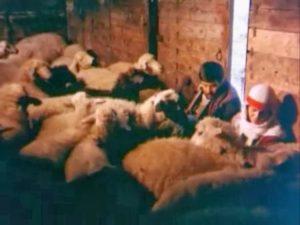 the-herd-suru-5